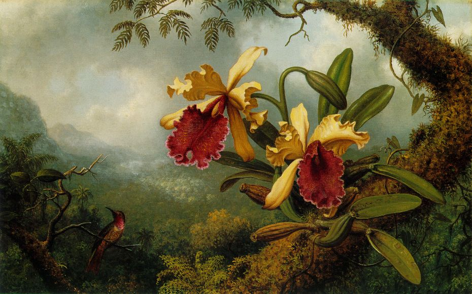 Martin johnson heade for Oil paintings for sale amazon